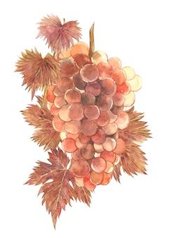 Акварельные иллюстрации гроздей винограда.