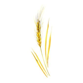 ライ麦製品イラストの水彩の穂。白の塗装の自然食品を塗装