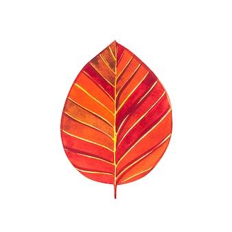 Осенний лист - бук. осенний кленовый лист изолированы. акварельные иллюстрации