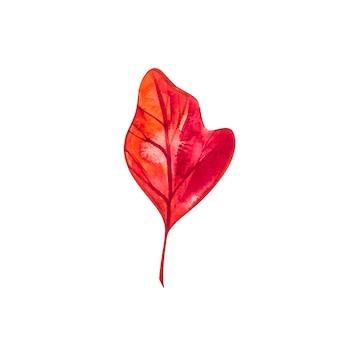 Осенний лист - сассафрас. осенний кленовый лист изолированы. акварельные иллюстрации