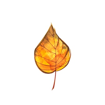 Осенний лист - катальпа кленовая. осенний кленовый лист изолированы. акварельные иллюстрации