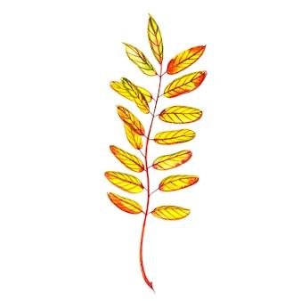 Осенний лист - мед. осенний кленовый лист изолированы. акварельные иллюстрации