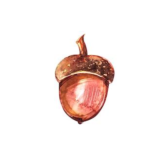 Ручной обращается акварель желудей изолированы. акварельные иллюстрации осенний лист.