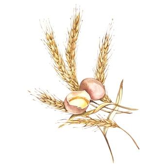 卵と小麦を一緒に描いたイラスト手描きの水彩画。