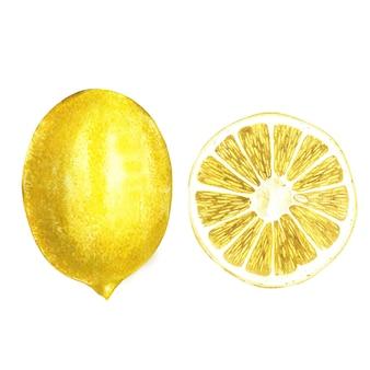 水彩の黄色いレモン。あなたのデザインの手描き水彩要素。