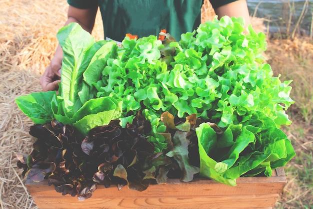 生の新鮮な収穫のサラダ野菜の完全な大きな木枠を保持している男の手
