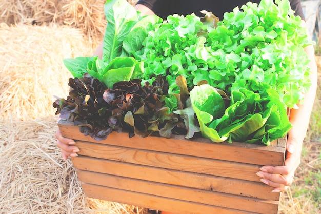 生の新鮮な収穫のサラダ野菜の完全な大きな木枠を保持している女性の手