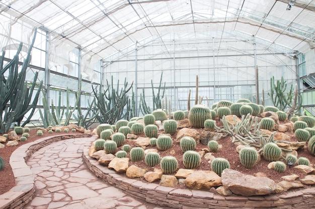 Ботаническая флора цветение сад ботаника тепла
