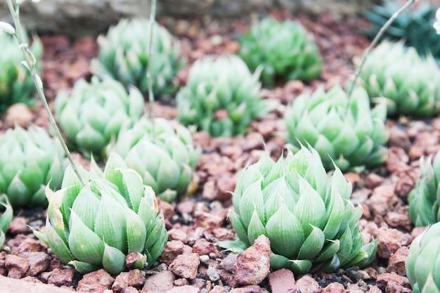 Украшение флоры и фауны