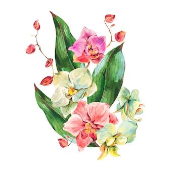 自然なヴィンテージ水彩蘭
