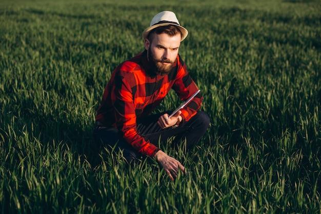 Молодой красивый бородатый фермер с таблеткой анализирует урожай в пшеничном поле в начале лета