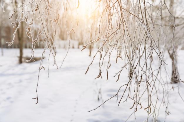 Зимний фон на закате с снежными ветвями. праздничная рождественская открытка