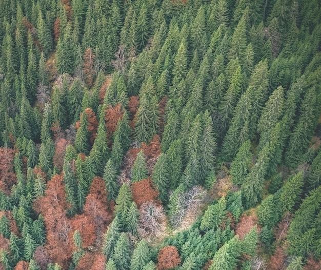 Стильный осенний лес
