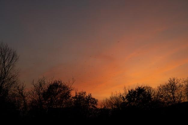 鳥と木と夕焼け空。