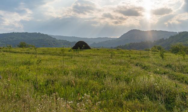 晴れた日に緑の牧草地