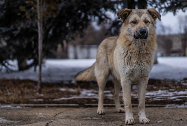 路上のホームレスの犬