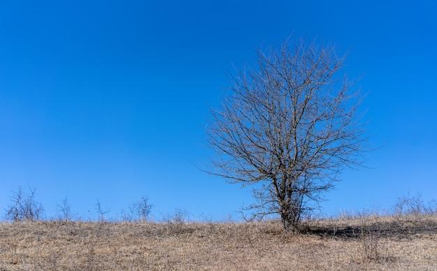 Маленькое голое дерево на фоне неба