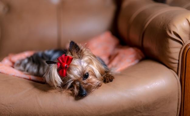 悲しい犬は肘掛け椅子にあります