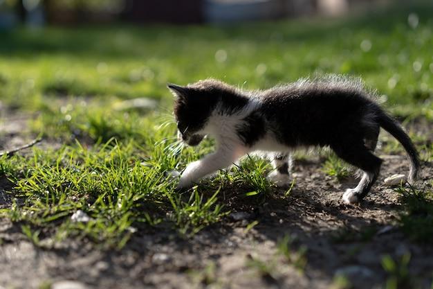 路上で一人で小さな子猫