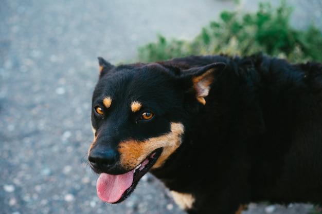 口を開けて通りの犬。