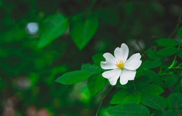 黄色の乳棒で咲く白い花