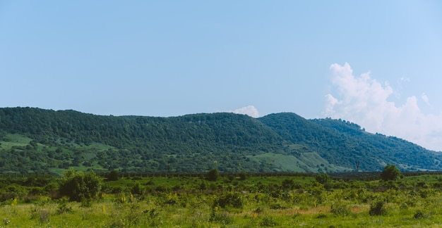 Равнина со многими растущими деревьями