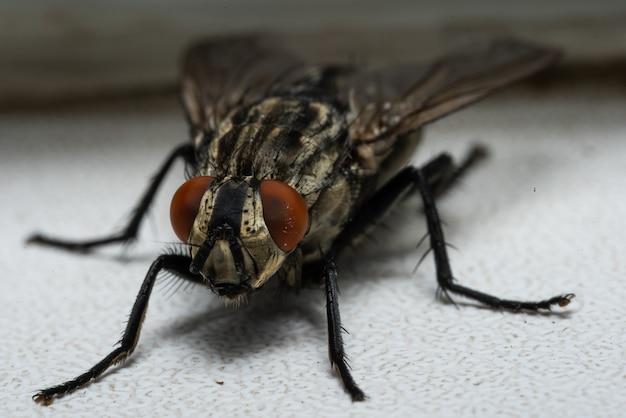 Макро фотография мухи