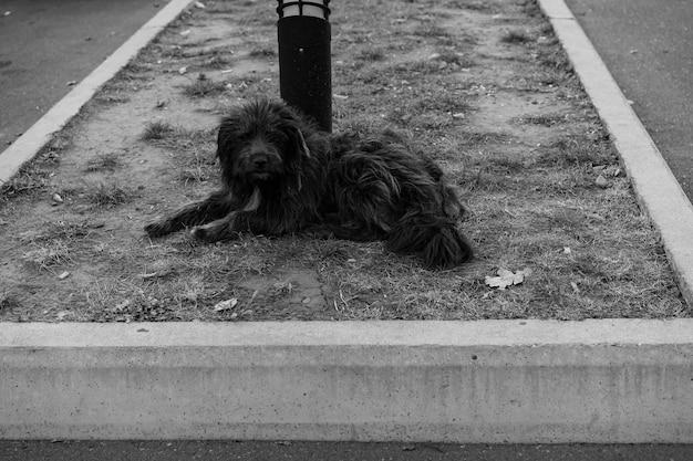 Бездомная собака лежит на земле