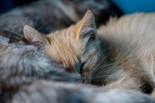 Мама кошка и ее маленькие котята