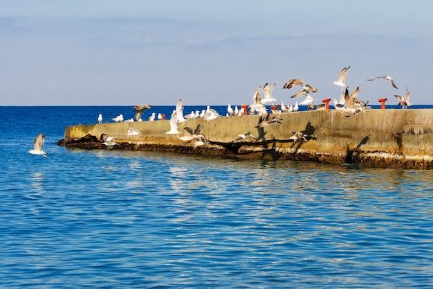 防波堤から離陸するカモメの群れ