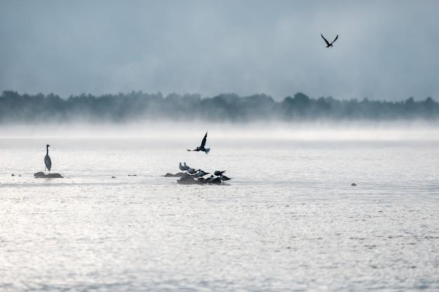 Цапля и чайки на туманном озере