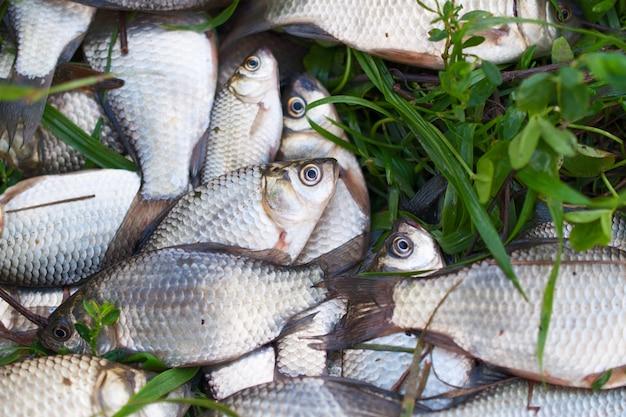 小さな川の魚は緑の芝生にあります