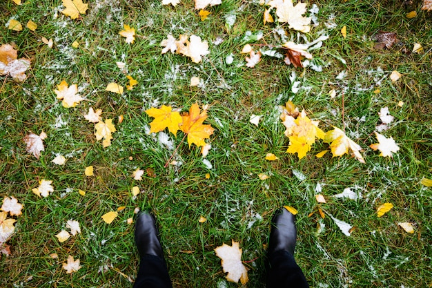 黄色の紅葉は緑の芝生にあります。