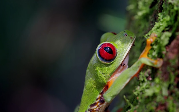 Коста рика дикая природа природа животные