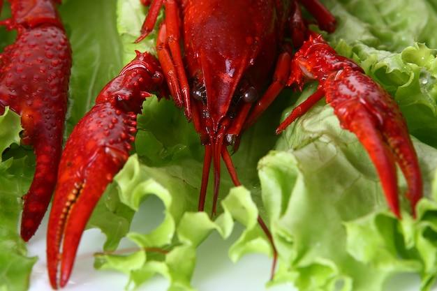 Красный коготь с зеленым салатом