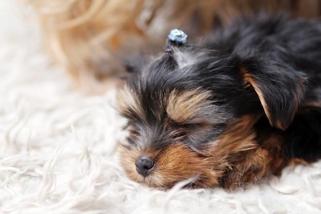 Маленький милый щенок дома