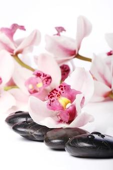 Спа камни и красивая орхидея