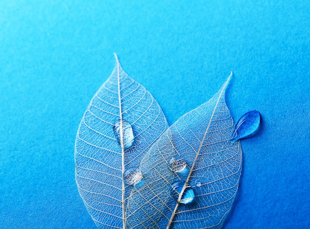 テーブルの上の葉
