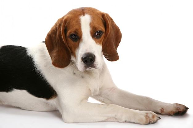 美しいファンキーな犬