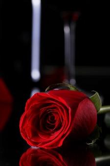 Красная роза в темноте