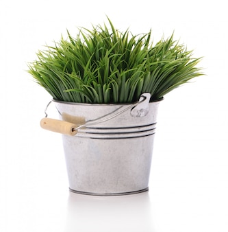 Зеленая трава в ведре
