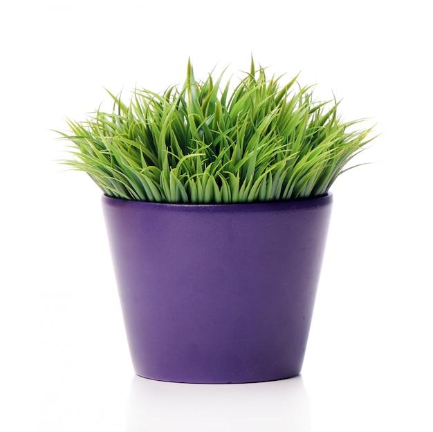 Трава в горшке