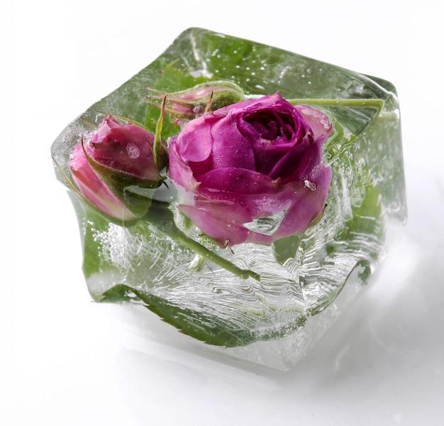 Замороженная роза