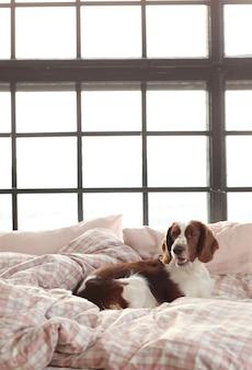 朝はベッドで犬