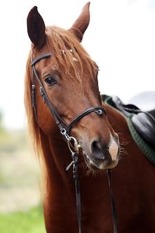 美しい茶色の馬