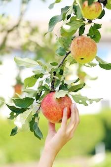 Рука и яблоко