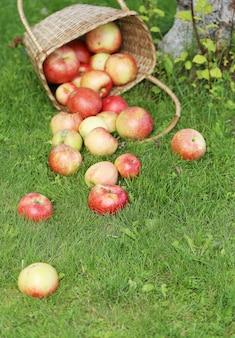 草の上のリンゴ