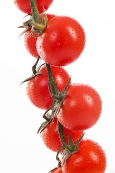 Свежие помидоры черри на ветке