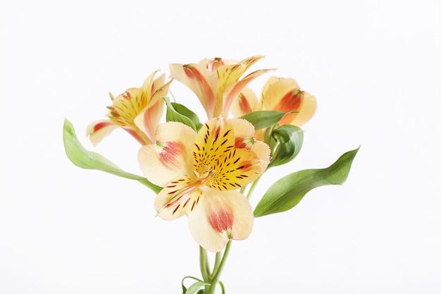 分離された花の頭