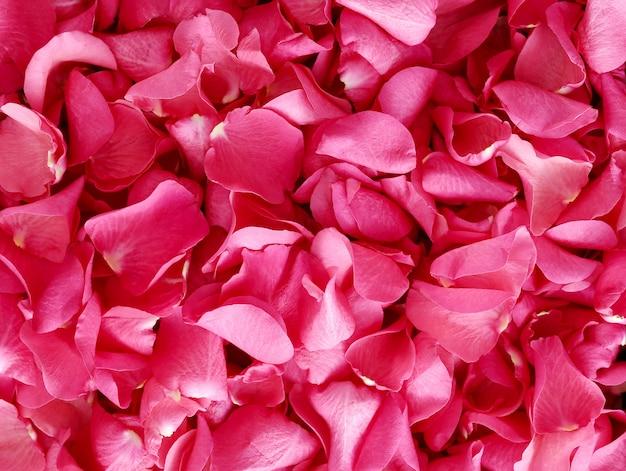 赤い花びら